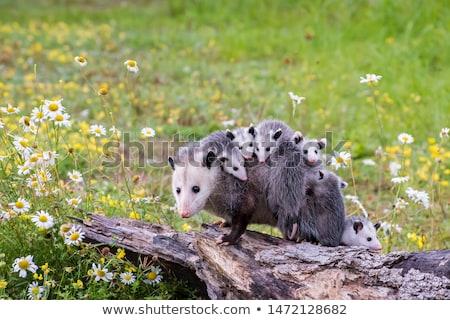 Fiatal mászik fa erdő természet állat Stock fotó © saddako2