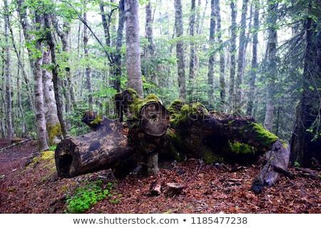 élet erdő vektor végtelen minta három baba Stock fotó © LittleLion