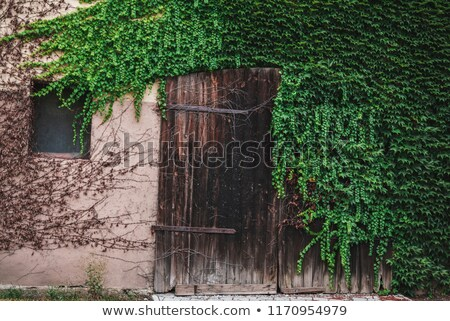 Ivy covered door and window Stock photo © njnightsky