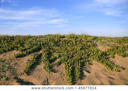 margarida · praia · branco · pedras · blue · sky · foco - foto stock © lunamarina
