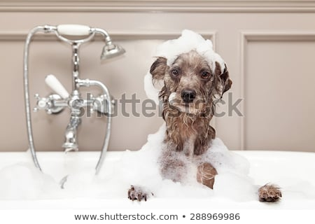 Dog In the Bath Tub Stock photo © ArenaCreative