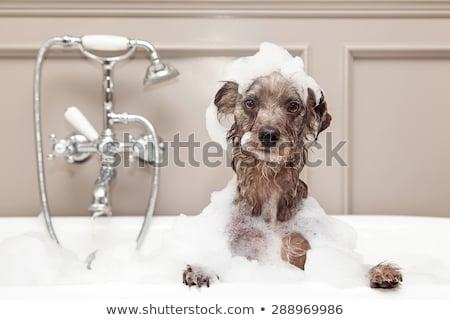 стиральные · собака · собачка · человека · очистки · чистой - Сток-фото © arenacreative