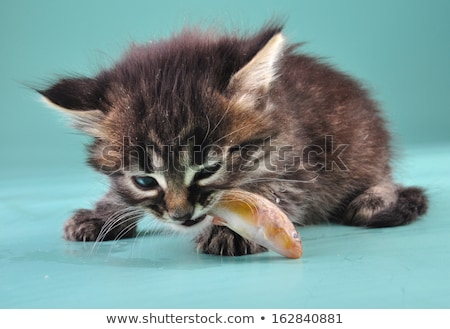 kitten eating fish stock photo © ivonnewierink