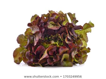 Kırmızı marul bahar sağlık alan kir Stok fotoğraf © Virgin