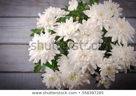 Virágcsokor fehér krizantém fából készült virág tavasz Stock fotó © inxti