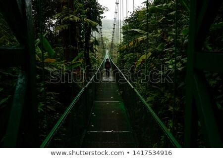 Camino forestales Costa Rica árbol naturaleza paisaje Foto stock © bmonteny