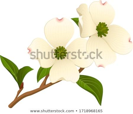дерево цветения весны Vintage стиль Сток-фото © Melpomene