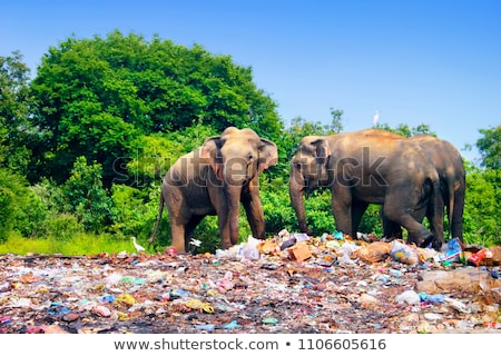 Polluted Fauna Stock photo © Lightsource