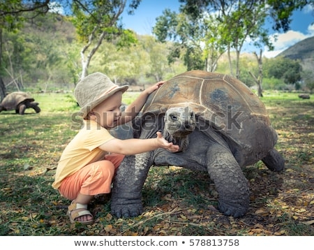 Baby Giant Tortoises Stock photo © searagen