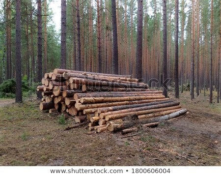 Summer Landscape with Stack of Pine Logs  Stock photo © tainasohlman
