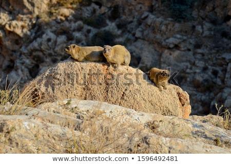 trail into a desert canyon stock photo © wildnerdpix