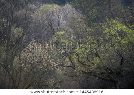 подробность чешский ива дерево Nice природного Сток-фото © jonnysek