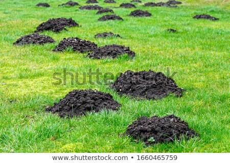 моль холмы луговой зеленая трава поздно после полудня Сток-фото © simazoran