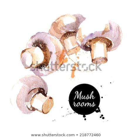 акварель вектора гриб грибы белый Живопись Сток-фото © kostins