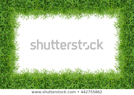 Golf in the framework leaves Stock photo © rufous