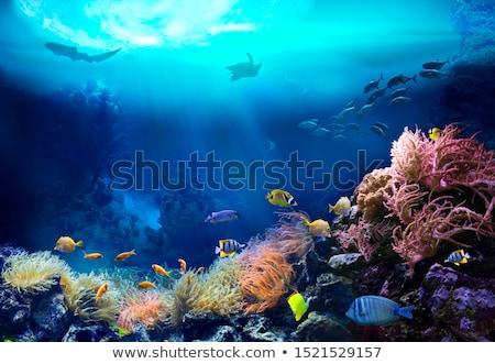 коралловый риф подводного мнение дисков спорт воды Сток-фото © bank215