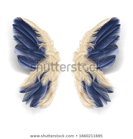 feather with butterflies stock photo © blackmoon979