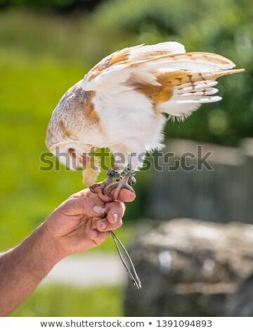 coruja · retrato · grande · laranja · fundo · beleza - foto stock © avheertum