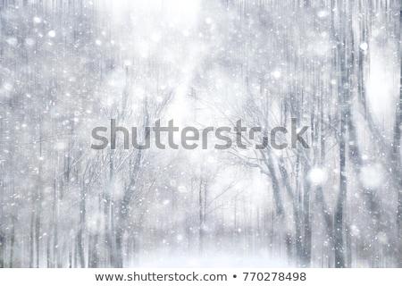 Güzel kış soyut kar taneleri mavi ışık Stok fotoğraf © olgaaltunina