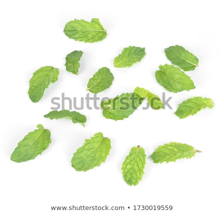 Fresh mint on white background closeup Stock photo © yelenayemchuk