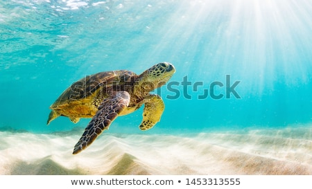 Sea turtle and fish swimming underwater Stock photo © bluering