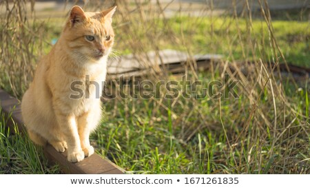 cute orange cat with furry tail sitting stock photo © feedough