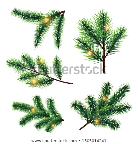 Collection of Christmas spruce trees and branches  Stock photo © Sonya_illustrations