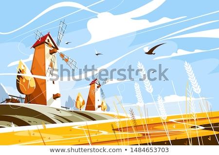 пшеницы ветер области ветреный день природы Сток-фото © Dinga