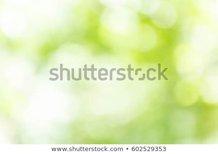 a light green blurred background of green trees in a spring park with a bright bokeh effect stock photo © artjazz