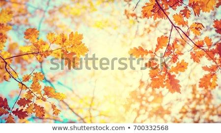 Sonbahar kahverengi doğa sahne sarı yaprakları Stok fotoğraf © fotoduki