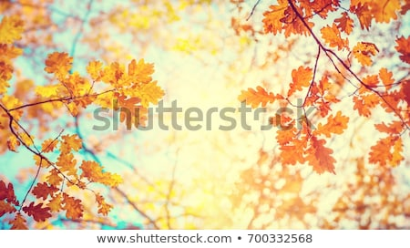 automne · layout · blanche · espace · texture · nature - photo stock © fotoduki