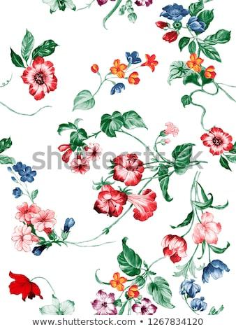 Rano chwała kwiaty czerwony kolor ilustracja Zdjęcia stock © colematt