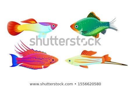 зеленый · простой · рыбы · Живопись · красный · белый - Сток-фото © robuart