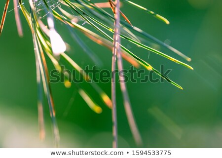 Plant frame with green pine needles pattern on a light background. Greeting card. Stock photo © artjazz