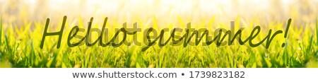 Hello lata karty tropikalnych roślin wody Zdjęcia stock © cienpies