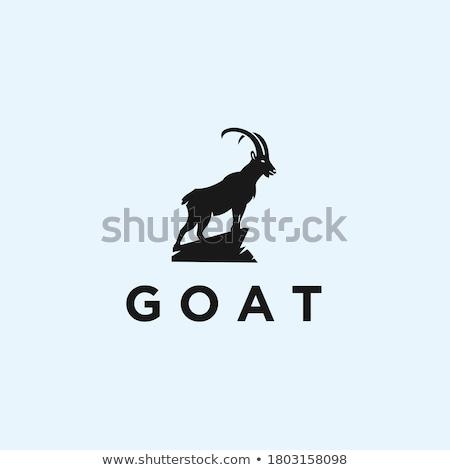 горные коза силуэта иллюстрация логотип символ Сток-фото © olegtoka
