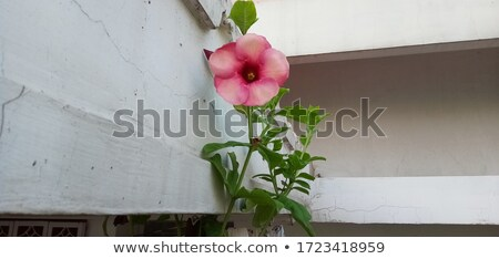 Pink flower in beautyful day stock photo © jomphong
