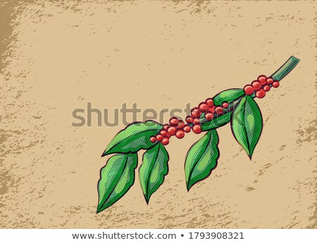 Coffeehouse Advertisement, Branch of Coffee Beans Stock photo © robuart