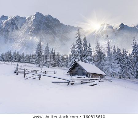 Hermosa invierno cabaña pino forestales árboles Foto stock © jossdiim