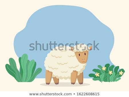 Farm Woolly Sheep, Rustic Ewe or Jumbuck on Meadow Stock photo © robuart