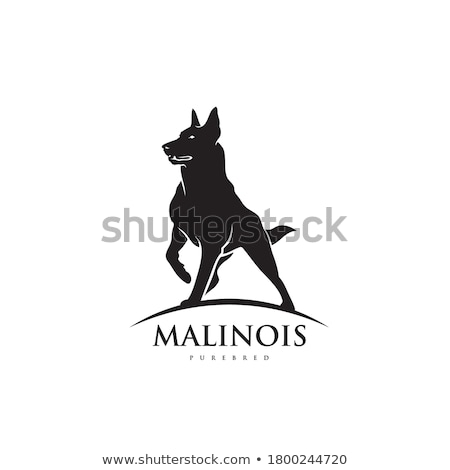 Belga juhászkutya kutya fehér állat barna bent Stock fotó © eriklam