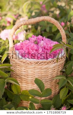 kosár · rózsák · izolált · fehér · piros · szalag - stock fotó © witthaya
