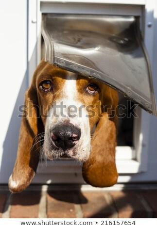 Ajtó vicces kutya ház fa szabadság Stock fotó © pcanzo
