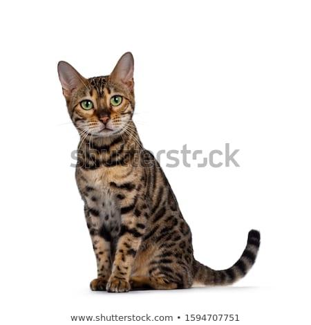 кошки · глядя · камеры · природы · свет · зеленый - Сток-фото © eltoro69