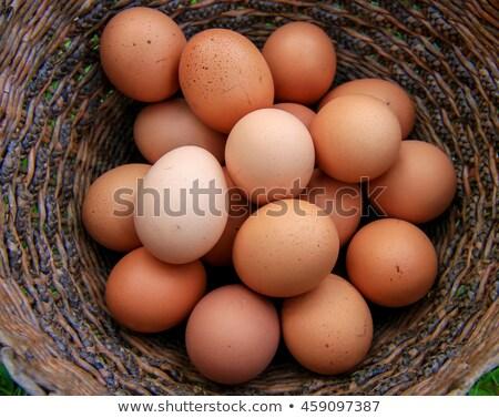 Quail eggs dozen on children hands Stock photo © lunamarina