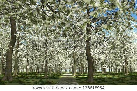 100 евро листьев дерево Сток-фото © TaiChesco