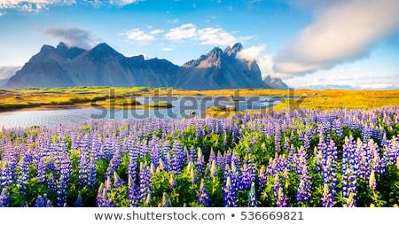 Fenséges természetes tájkép tavasz fű erdő Stock fotó © mariephoto