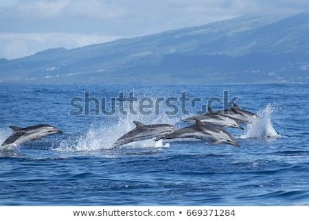 golfinho · saltando · fora · água · piscina · azul - foto stock © c-foto