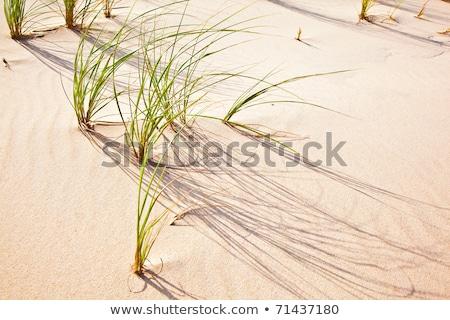 ветер трава песчаная дюна пляж текстуры облака Сток-фото © meinzahn