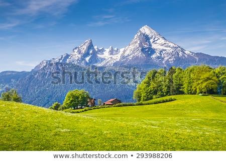 florescimento · campo · montanhas · primavera · paisagem - foto stock © natika